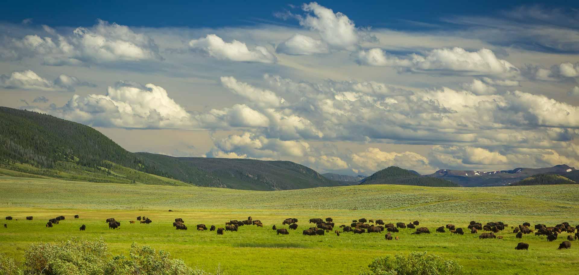Bison Ranchers